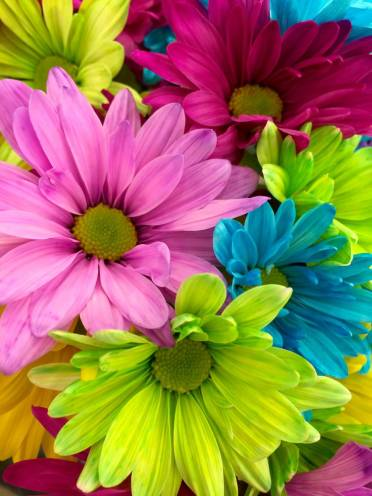 nature flowers spring colorful