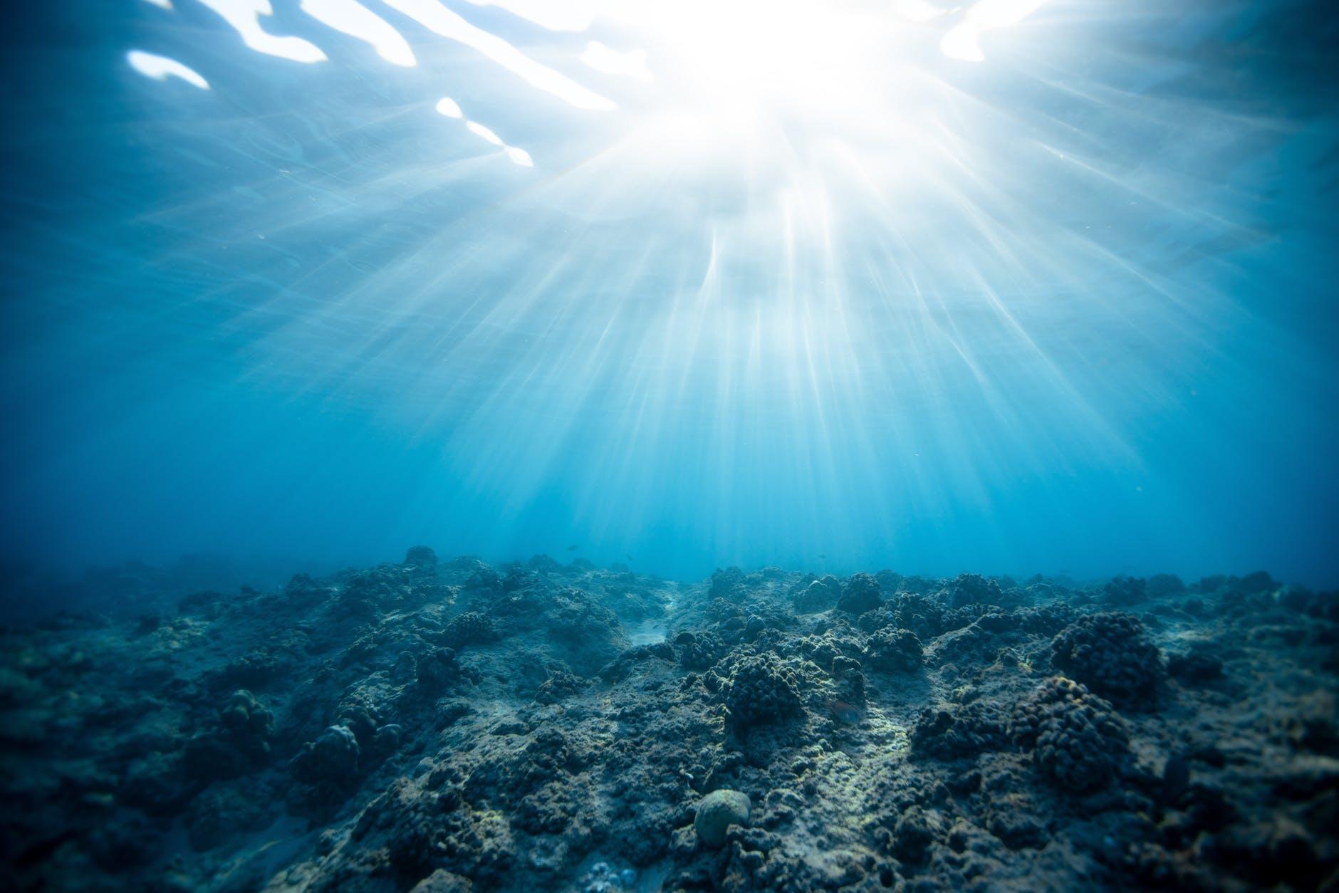 underwater photography of ocean